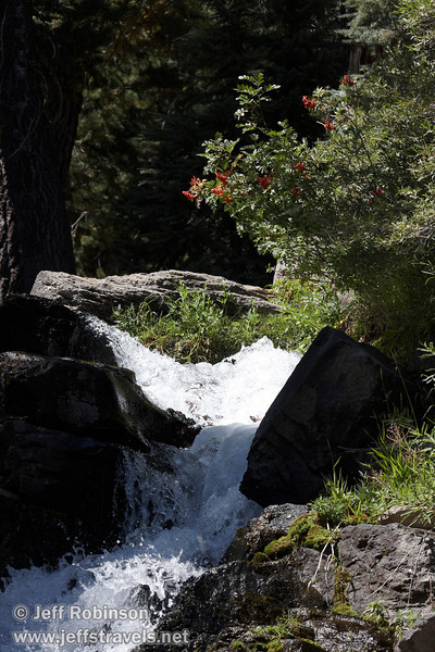 Mostly sunlit view of the very top portion of Kings Creek Falls, with red berries on a bush over it. Seen from about half-way down to the base of the falls. (9/10/2009, Kings Creek Falls hike, Lassen NP)
