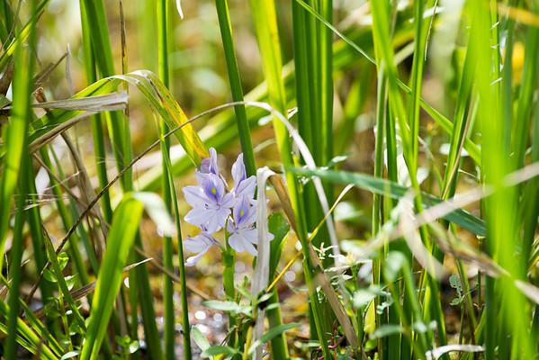 Louisiana Blue White
