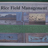 Sign:  Rice Field Management