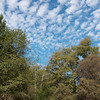 Trees and clouds over Water Lane in Pescadero