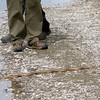 Gopher Snake on Trail east of Stevens Creek between Crittenden and La Avenida.  1-Mar-2014