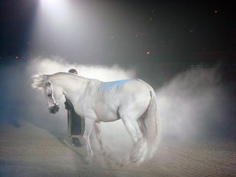 Pretty horse.