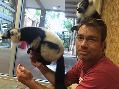 Lemur Experience at Jungle Island