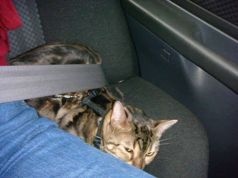 On the way to Alabama. Naneko had squirmed out from behind me, to sit beside me . . . and share my seat belt . . .