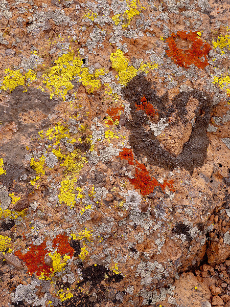 <em>Lively Lichens</em> Hole-in-the-Rock, MNP Copyright 2008 Ken Walsh