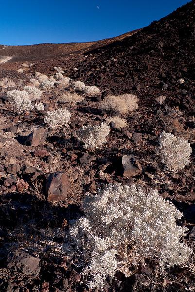 <em>Desert Holly</em> Amboy Crater Copyright 2008 Ken Walsh