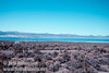 Roads leading to South Tufa (with pick-up truck coming up the road) and Navy beach, with Mono Lake and Paoha Island (left) in the background. (Mono Lake 2002)