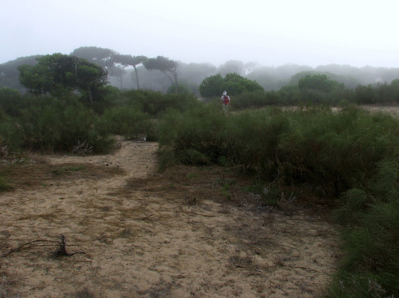 humid cloudes in coastal forest of Larache (North Morocco 2009)