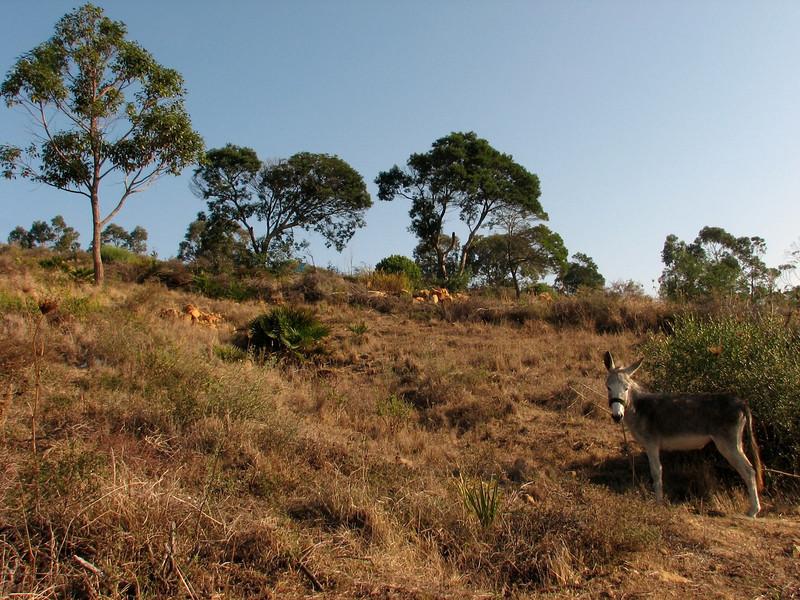 habitat of Narcissus humilis and Narcissus viridiflorus (North Morocco 2009)
