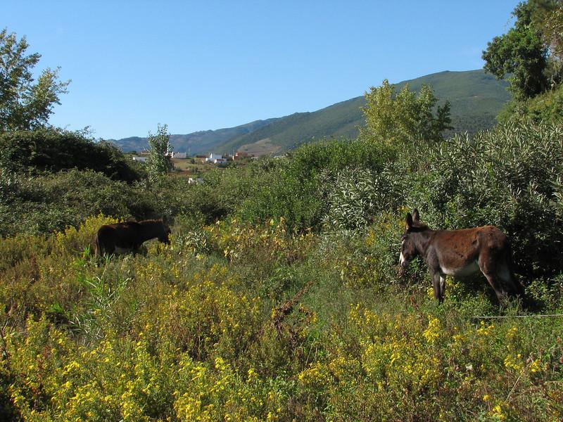 landscape (North Morocco 2009)