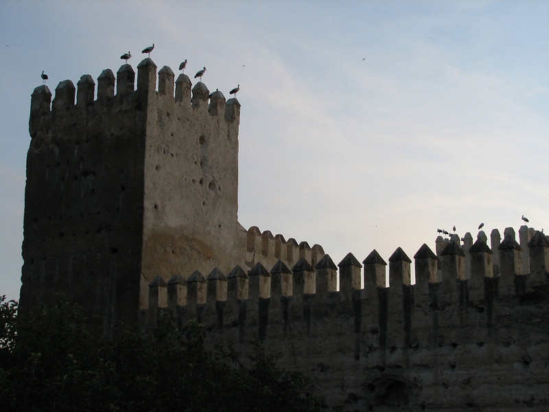 Ciconia ciconia (NL: Ooievaar) on castle of Fes (North Morocco 2009)