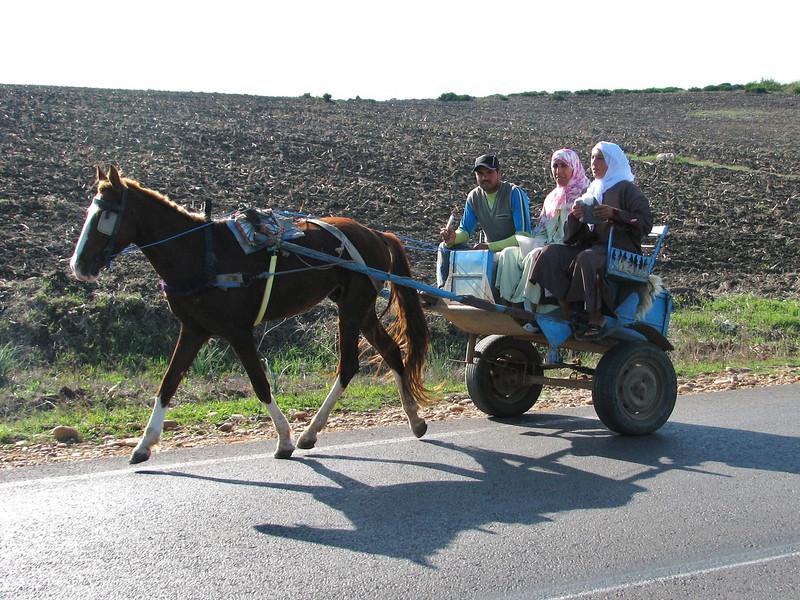 transport (North Morocco 2009)