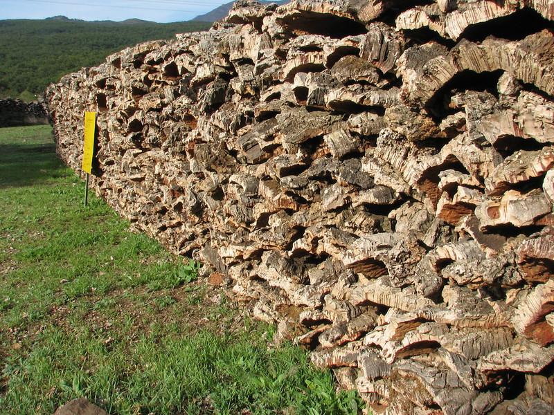 cork bark of Quercus suber (North Morocco 2009)