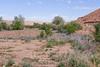 Desert shrubs-1000369