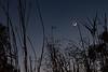 Crescent moon-1070807