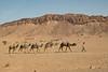 Camel train-1070712