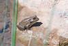 Frog digi-1070688