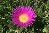 Flower-1827