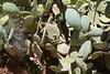 Cactus-0986
