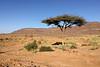 Desert tree-1825