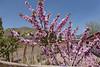 Blossom-1000527