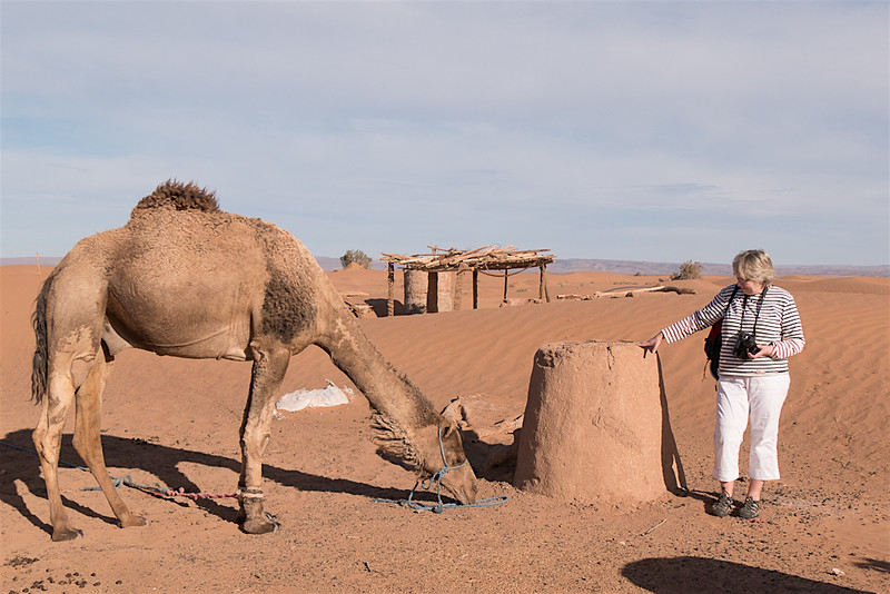 L  and camel-1070610