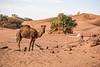Desert encampment-1070608