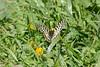 Butterfly-2543