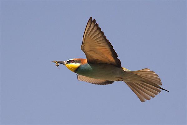 Morocco birding tour 03-04-17