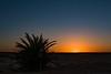 Dawn scenic-1070811