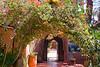 Bougainvillea garden-1070702