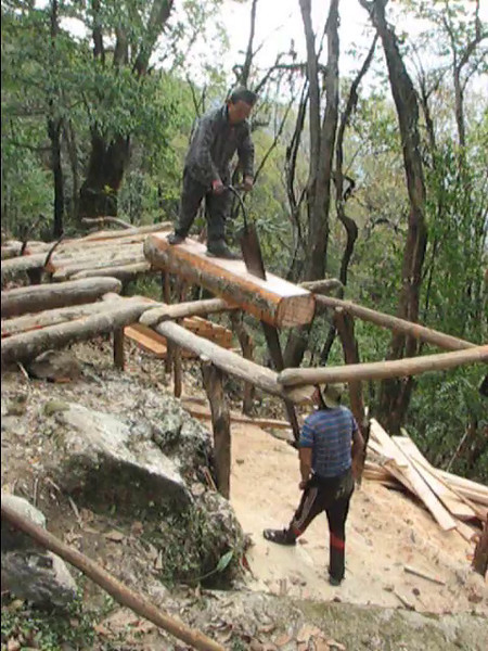 Film: Wood sawing in the forrest, Pangkom 2850m-Najing 2600m