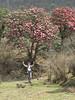 Rhodo paradise, Najing 2600m-Chalem (Chereme) Kharka 3450m