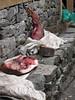 Fresh meat, Kothe 3700m