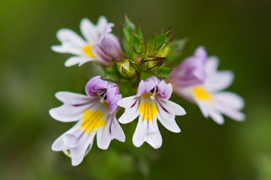 Unidentified white flower - Hirtle Beach - Nova Scotia