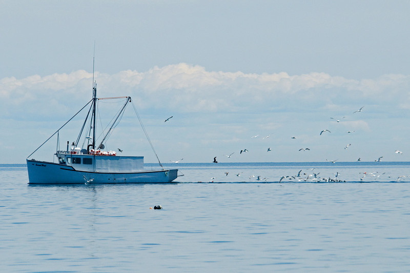 Notice all the gulls following this oyster boat.