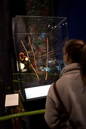 04/12/2010 - Te Papa Museum