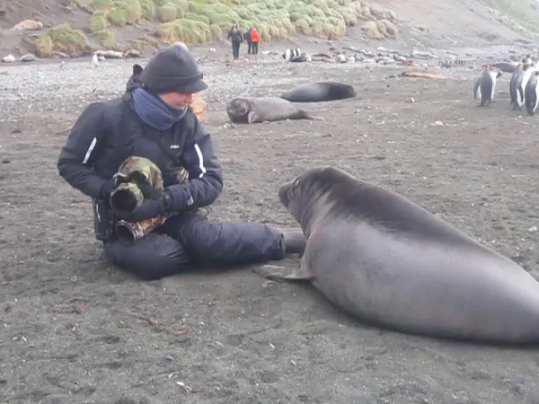 Video: Raja and Southern Elephant Seal (Mirounga leonina) weaner
