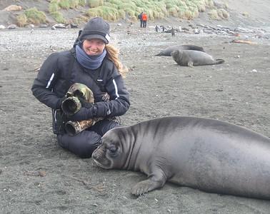 Raja and Southern Elephant Seal (Mirounga leonina) weaner
