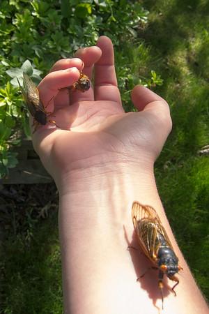 2013_06 16 year cicada hunting trip