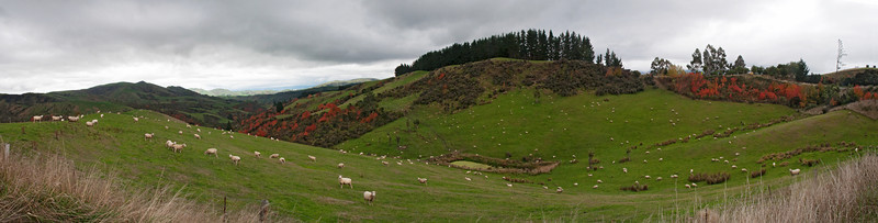 Panoramic B - The Leader Road - South Alps, NZ