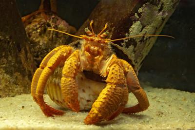 Hermit Crab - 02