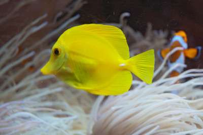 Tropical Fish - 05 - (Unidentified)