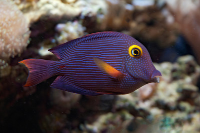Tropical Fish - 02 - (Unidentified)