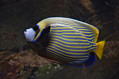 Tropical Fish - 03 - (Unidentified)