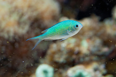 Tropical Fish - 06 - (Unidentified)