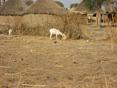 Niger--February 8th