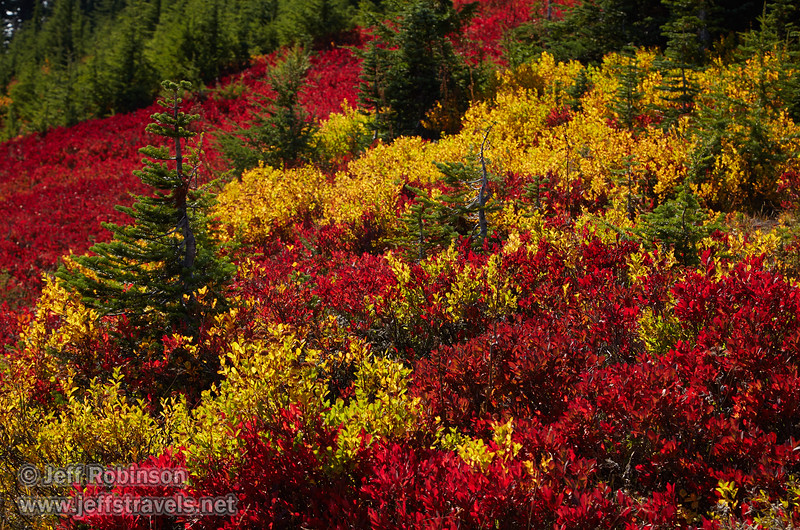 (9/11/2015, Skyline Trail, Mt. Rainier NP, WA)<br /> EF24-105mm f/4L IS USM @ 92mm f/9 1/250s ISO200