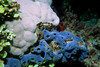 Coral and sponge. This shot was taken at night when coral polyps come out and feed.