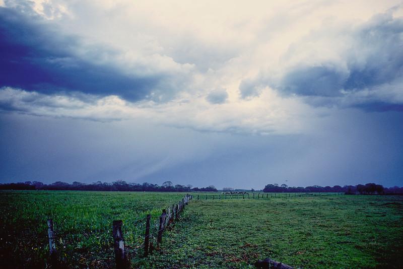 The land around Pantanal Fazendas was flat, wet and green.